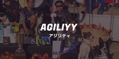 アジリティ【マイライフスポーツ】